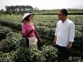 浙大学霸夫妻放弃高薪工作 带女儿进山种茶开私塾
