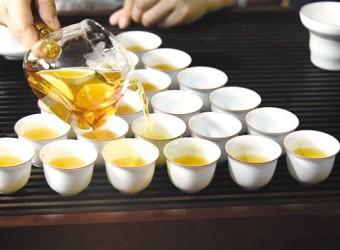如何选购有机茶?挑茶要懂看茶园